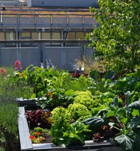 Plantekasser med regnvandsopsamling