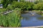 Biodiversitet i byen