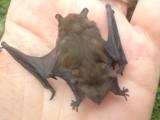 Bat-Nat d. 9.juni