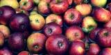 Lån et æblemosteri