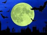 Bat-Nat i Fælledparken