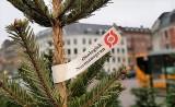 Køb dit økologiske juletræ påØsterbro